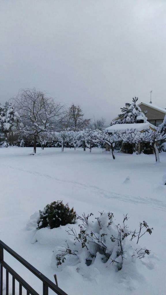 Jardín nevad 07 02 2018